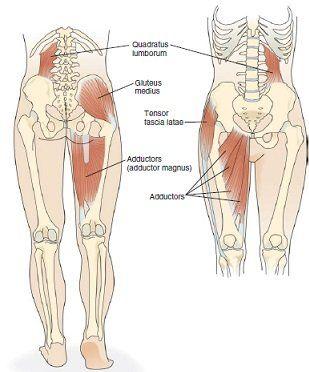 lateral pelvic tilt chiropractor